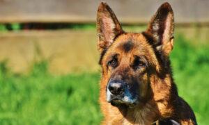 Είναι επίσημο: Τα ζώα έχουν έκτη αίσθηση και προαισθάνονται τους σεισμούς (vid)