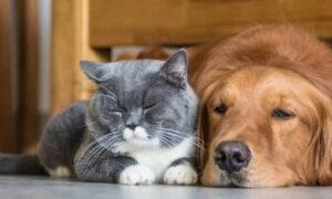 Κορωνοϊός: Τι συμβουλεύουν οι ειδικοί για την προστασία των κατοικίδιων ζώων