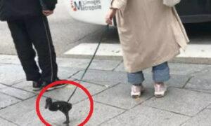 Αρχίσαμε: Γυναίκα έβγαλε βόλτα την πάπια της στο lockdown (pic & vid)